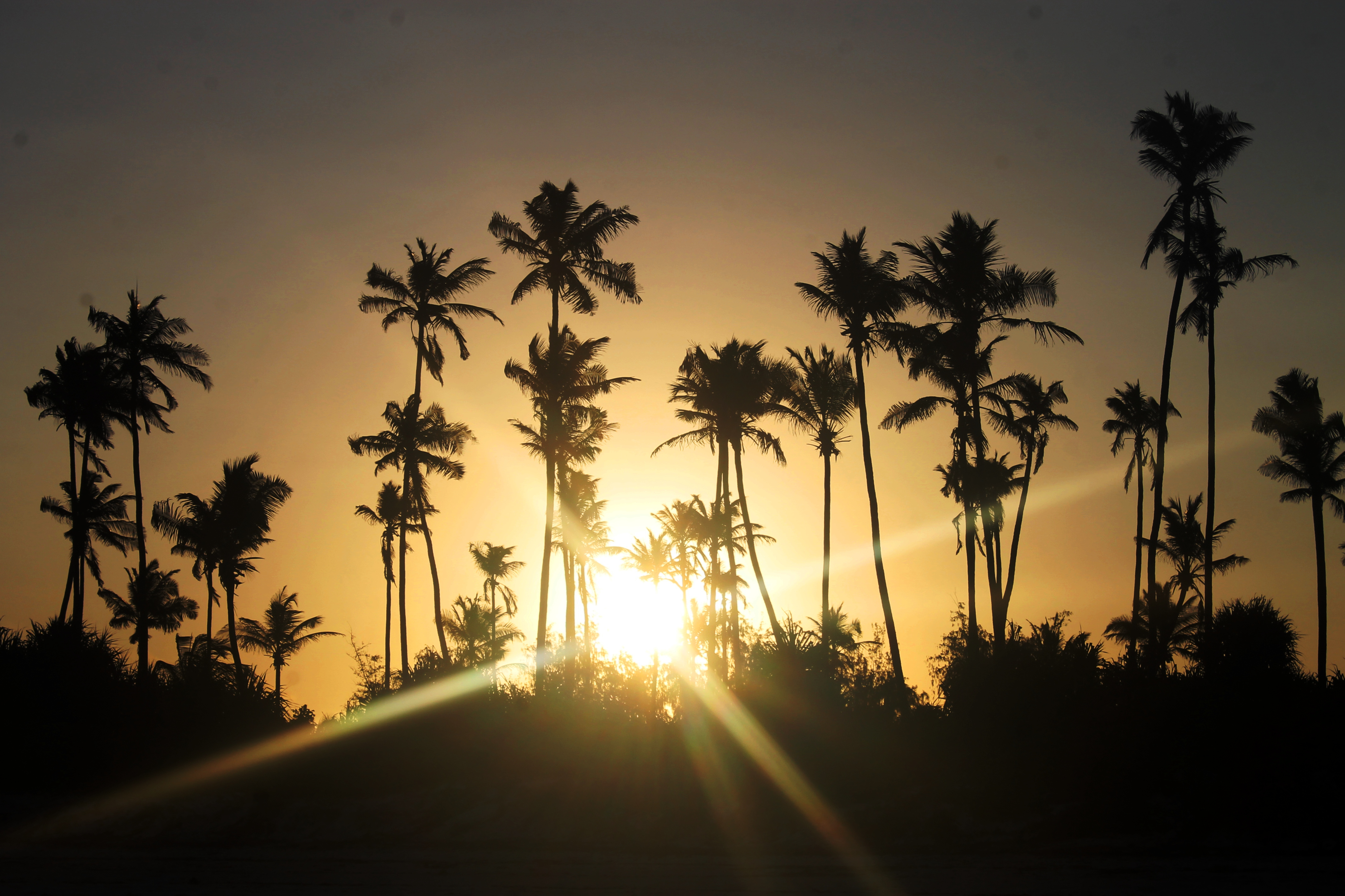 Palm trees at sunset on Matemwe Beach, Zanzibar