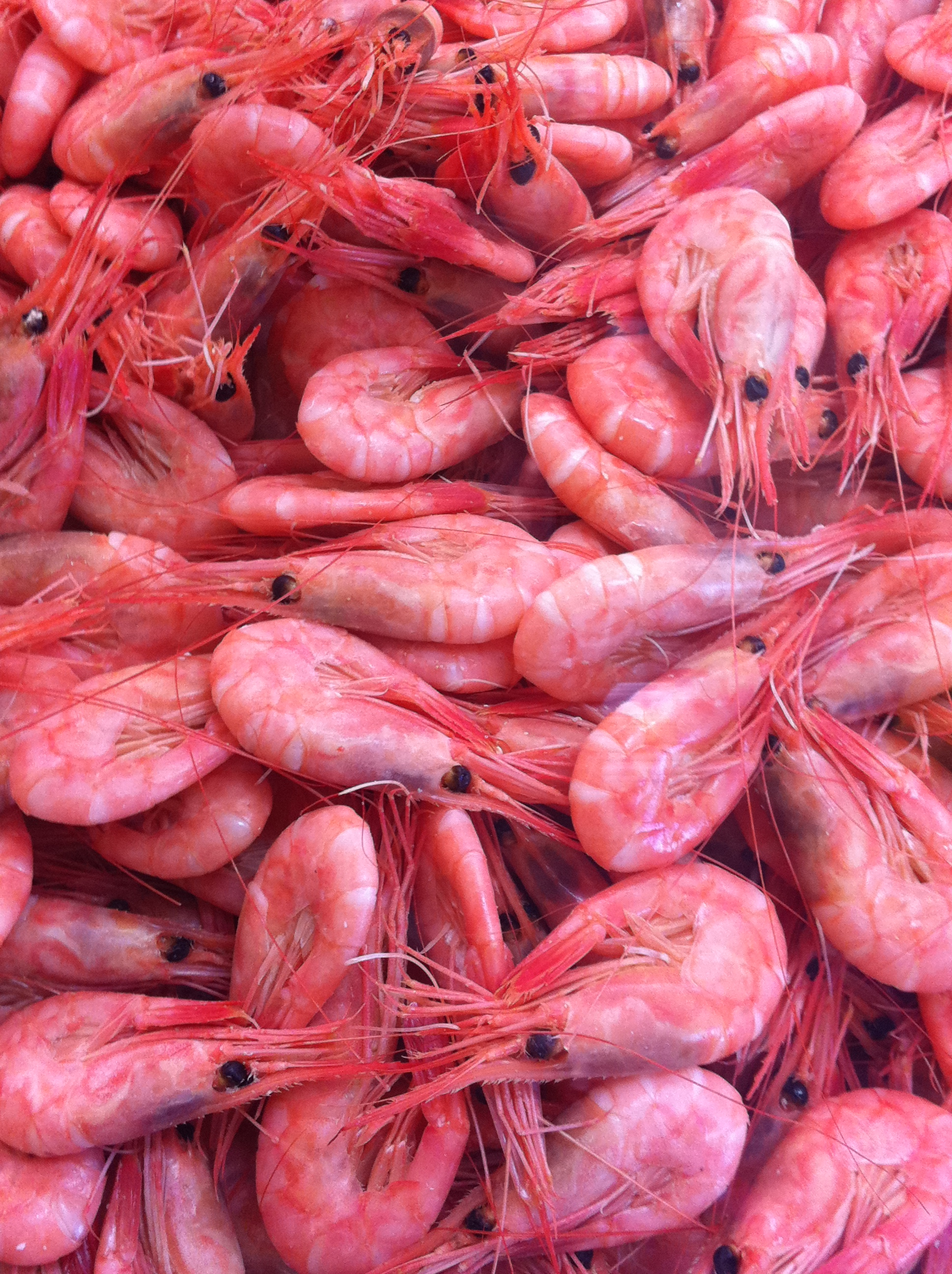 Prawns on sale at Smögen fish market in Bohuslän, Sweden